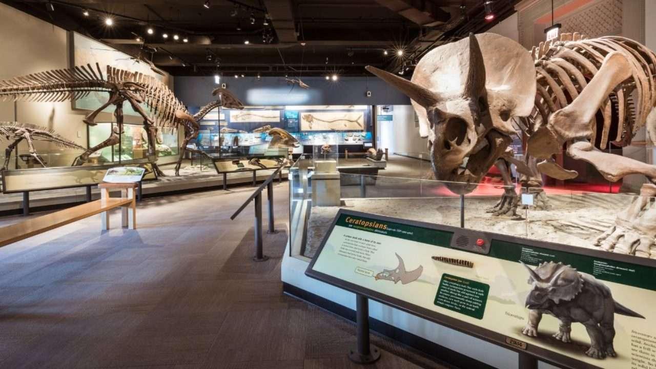 Čikaški Field Museum omogućiće stanovnicima Ilinoisa besplatan ulaz u septembru
